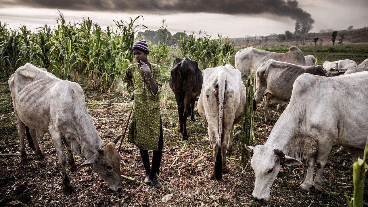 Arewa leaders task FG on measures to ameliorate plight of Fulani Herdsmen