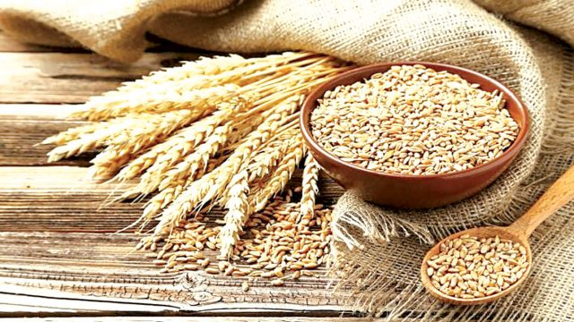 CBN supports wheat value chain to boost external reserves