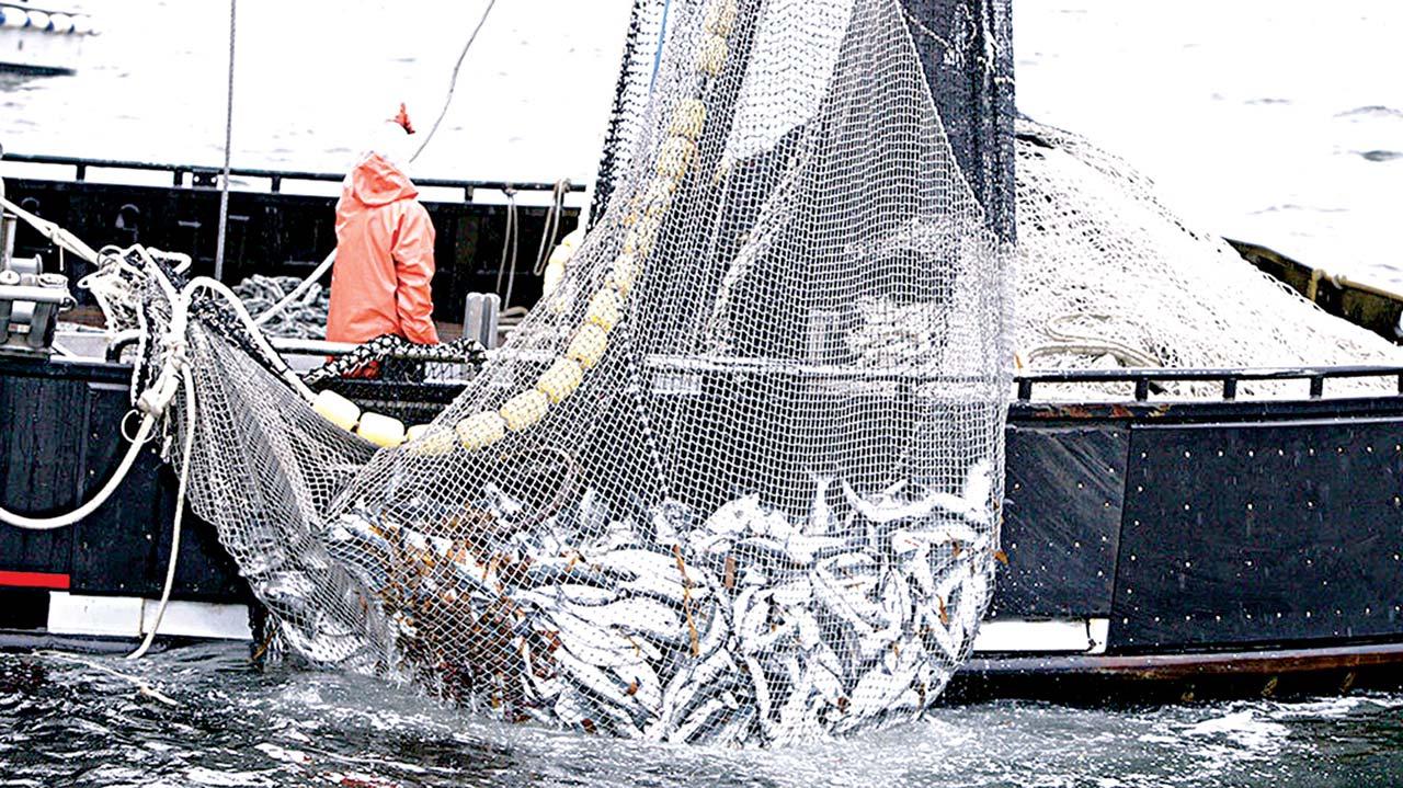 [Image: illegal-fishing.jpg]