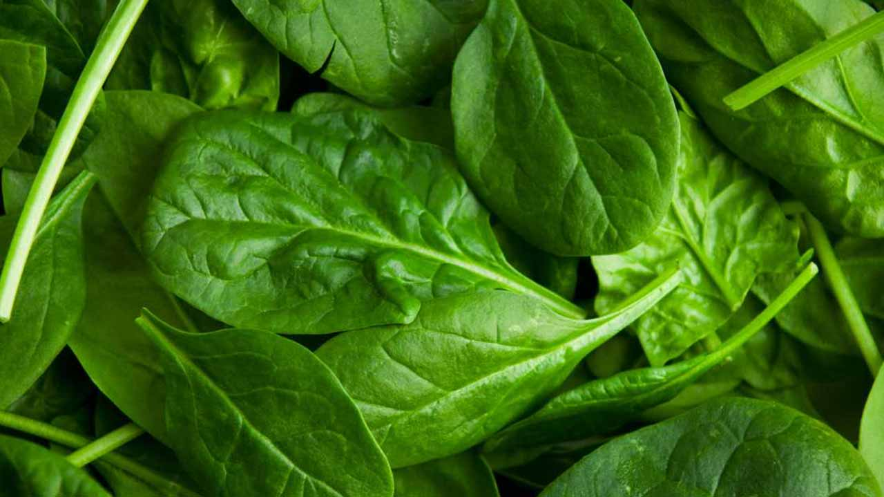 Spinach: The leafy green superfood | The Guardian Nigeria News - Nigeria and World News