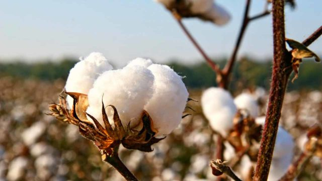 CBN, state government pledge support for cotton farmers in Ekiti - Guardian