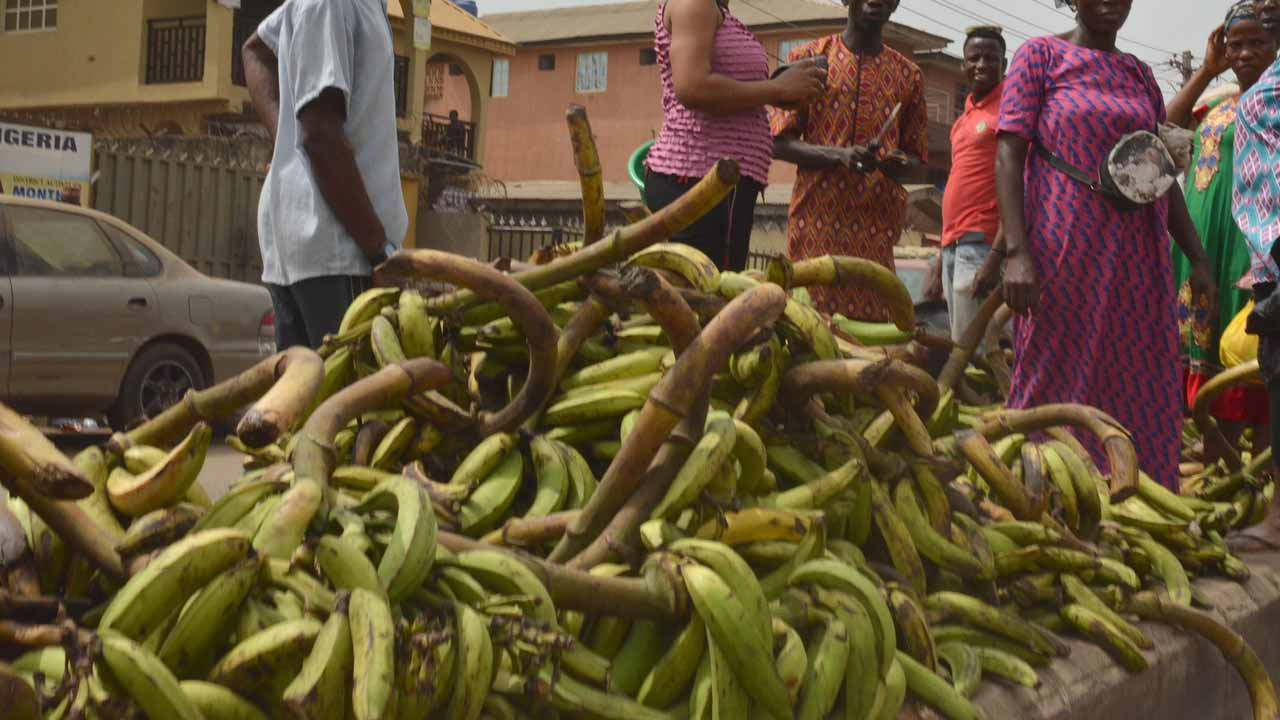 How to maximize potentials of plantain