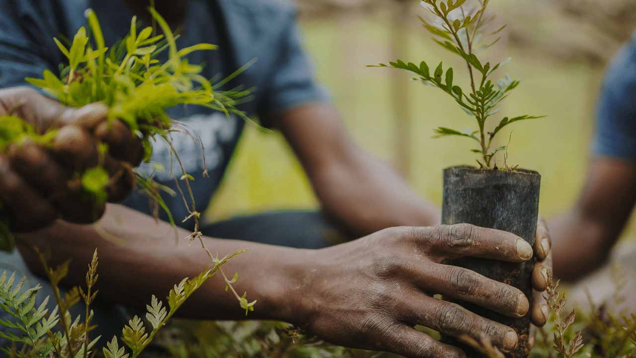 Lagos targets pupils in tree -planting campaign | The Guardian Nigeria News  - Nigeria and World News — Nigeria — The Guardian Nigeria News – Nigeria  and World News