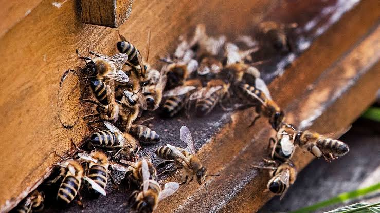Hospitalized After Stung by Swarm of 40,000 Bees in California