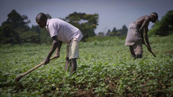 FG disburses N300bn to farmers
