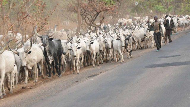 MASSOB gives herdsmen 48 hours to quit Enugu communityNigeria - Guardian