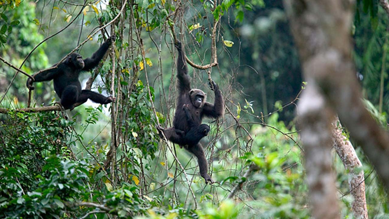 Image result for FG commits to wildlife protection, UN urges nature preservation