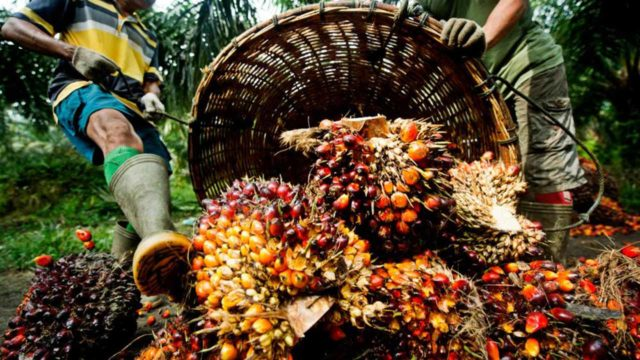 Nigeria looks to revive ailing palm oil sector