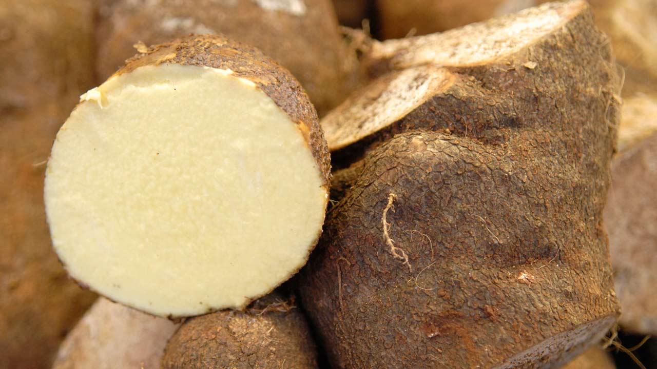 How yam extracts 'cure' breast cancer