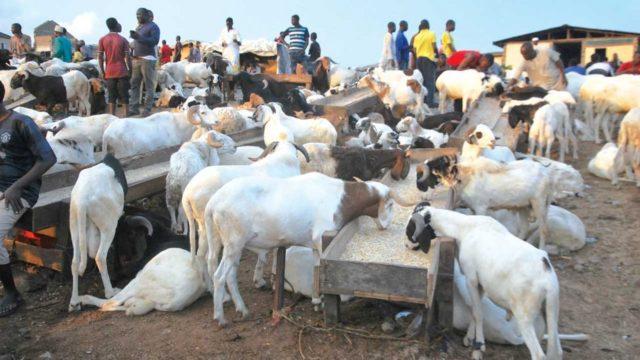 Eid-el Kabir: Kano residents groan over ram price hike