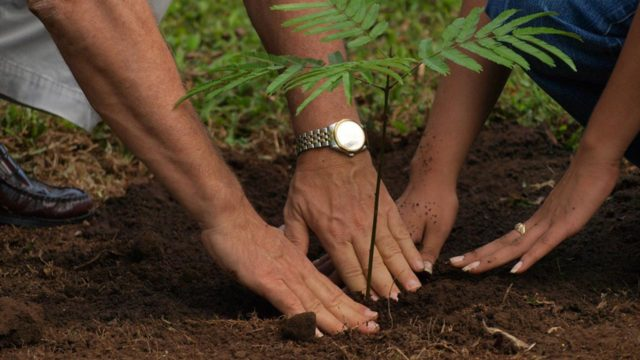 Ministry donates seedlings to army as Kwara government endorses tree planting - Guardian