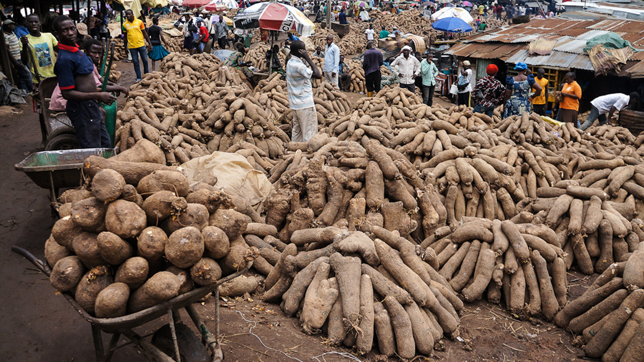 Revving up yam production, farmers' profit with technologies