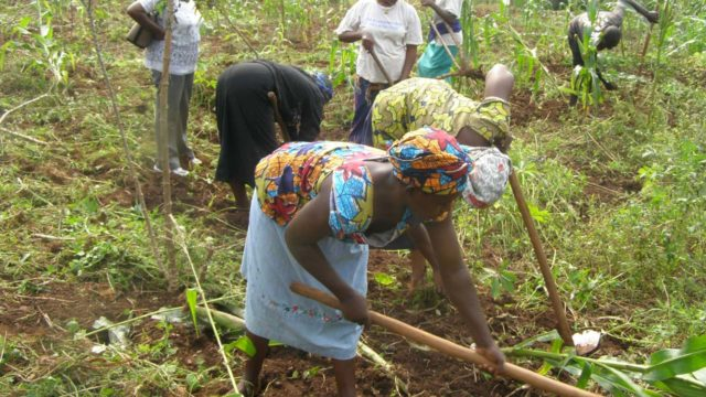 ActionAid seeks Central Bank's support for women farmers