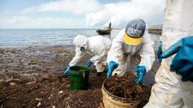 Mauritius takes stock of oil spill two months laterWorld