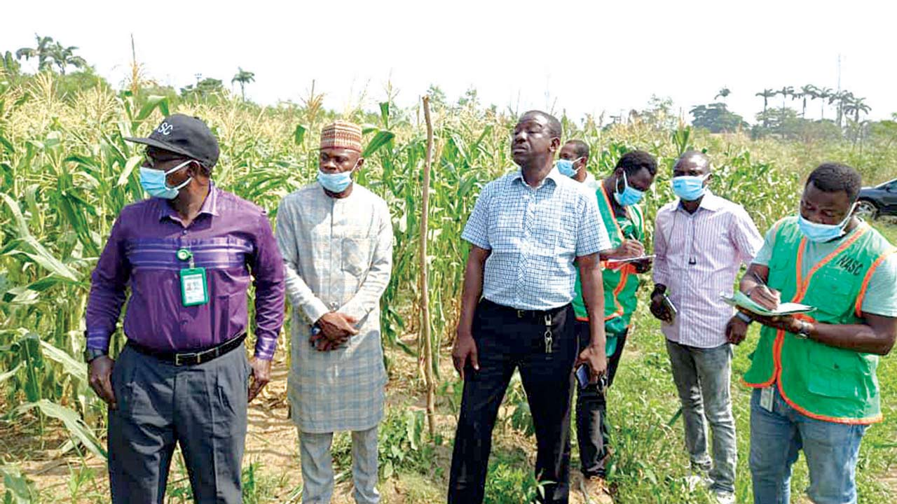 Seed council harps on quality to ensure productivity, food security