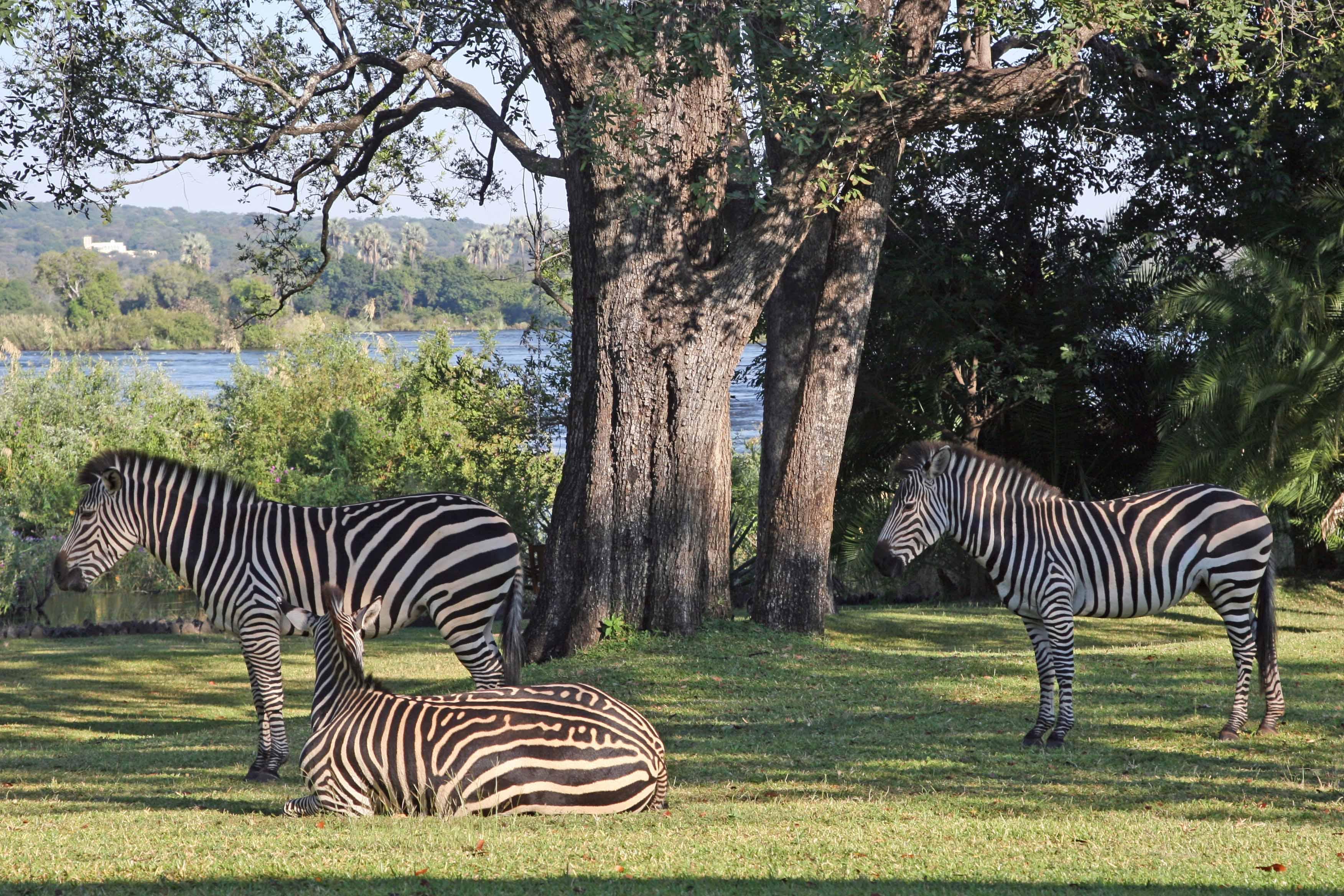 Zambezi-National-Park