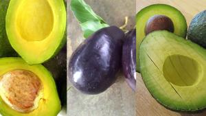 How Avocado Fruit Benefits Your Skin