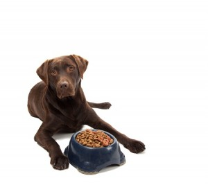 Foods You Shouldn't Feed Your Pets