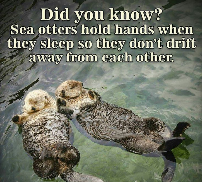Interesting Facts About Sea Otters!
