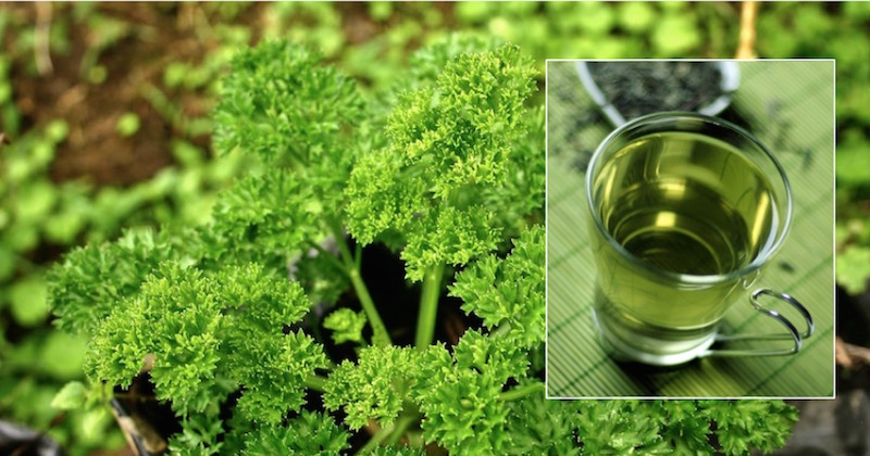 Kidneys Naturally With Parsley Tea